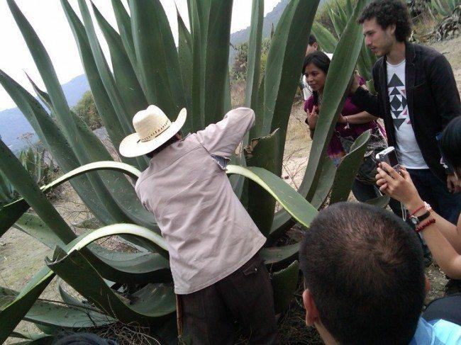 Aguamiel gastrotour prehispánico malinalco