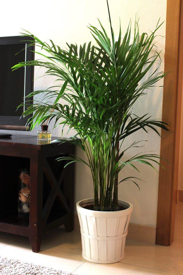 Deco cosas nuevas para mi casa - Plantas ikea naturales ...